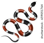 Coral Snake Vector Illustratio...