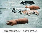 five homeless stray dogs  deep... | Shutterstock . vector #659119561