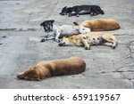 Five Homeless Stray Dogs...