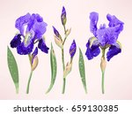 iris vector set | Shutterstock .eps vector #659130385