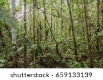 tangle of lianas in the... | Shutterstock . vector #659133139