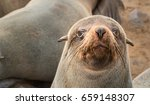 cape cross seal reserve in the... | Shutterstock . vector #659148307