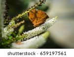 Stop Motionn Of Brown Butterfl...