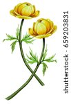 watercolor botanical... | Shutterstock . vector #659203831