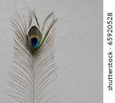 vintage wallpaper background with peacock`s feather - stock photo