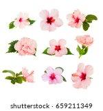 tropical flowers   set of fresh ... | Shutterstock . vector #659211349