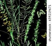 wilds grass pencils graphic on... | Shutterstock . vector #659219671
