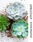 Succulent Growing Plants With...