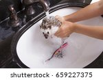 a hedgehog taking a bath ... | Shutterstock . vector #659227375