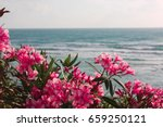 Pink Flowers Of Oleander Near...