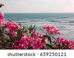 Oleandr Near The Sea