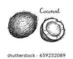 vector illustration of coconut. ... | Shutterstock .eps vector #659252089