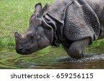 indian rhinoceros  rhinoceros... | Shutterstock . vector #659256115