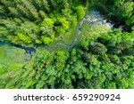 Green Forest  Swamp And Small...
