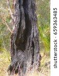burnt out tree in australian... | Shutterstock . vector #659363485