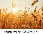 gold wheat field. beautiful... | Shutterstock . vector #659398321