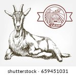 Sketch Of Goat Drawn By Hand O...