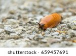 low angle shot of a red slug in ... | Shutterstock . vector #659457691