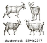 sketch of goat drawn by hand on ... | Shutterstock . vector #659462347