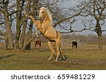 Stock photo  horse yellow horse with white mane and tail golden horse 659481229