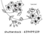 cherry blossom flowers drawing... | Shutterstock .eps vector #659499109
