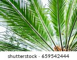 palm leaves green background... | Shutterstock . vector #659542444