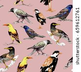 different colorful wild birds... | Shutterstock . vector #659612761
