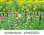 beautiful flowers backround | Shutterstock . vector #659632021