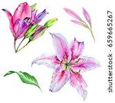 wildflower lily flower in a... | Shutterstock . vector #659665267