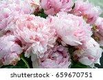 pink peonies in a crystal vase...   Shutterstock . vector #659670751