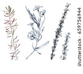 wilds grass and flowers pencils ... | Shutterstock . vector #659756944