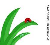 ladybug ladybird insect. fresh... | Shutterstock .eps vector #659801959