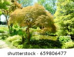 beautiful garden | Shutterstock . vector #659806477