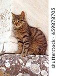 Small photo of Cat on Ephesus ruins. Ancient Greek city on the coast of Ionia near Selcuk. Izmir province. Turkey. Asia Minor