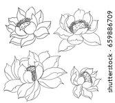 hand drawn lotus flower | Shutterstock .eps vector #659886709