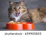 Portrait Of A Siberian Cat...