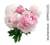 pink peony flower isolated on... | Shutterstock . vector #659921131
