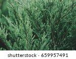 abstract green plant texture...   Shutterstock . vector #659957491