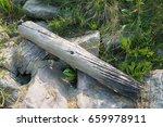 Driftwood 1 On The Beach