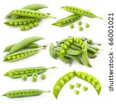 set of ripe green pea in the... | Shutterstock . vector #66001021