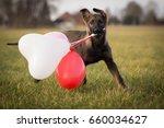 german shepherd dog puppy with... | Shutterstock . vector #660034627