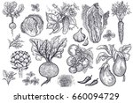 vegetables  roots  salads and... | Shutterstock . vector #660094729