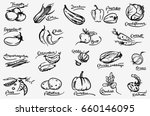 vegetable set. hand drawn... | Shutterstock .eps vector #660146095