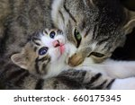 mother cat with her cute baby   Shutterstock . vector #660175345