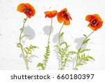 red poppies on a bleached wall... | Shutterstock . vector #660180397