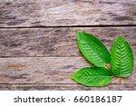 leaves of mitragyna speciosa...   Shutterstock . vector #660186187