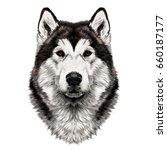 Dog Breed Alaskan Malamute Hea...