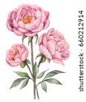 watercolor peonies  hand drawn... | Shutterstock . vector #660212914