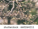 horizontal image of lush early... | Shutterstock . vector #660264211