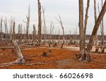Dead Trees In The Forest Around ...